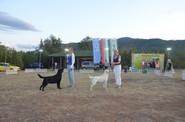 IDS Asenovgrad, Bulgaria 04.09.17 - CAC, CACIB, BOB, BIG-1!!!