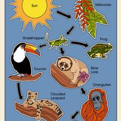 Illustration for Biology Course
