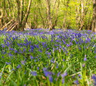It's nearly Bluebell season - get your family shoot booked up.