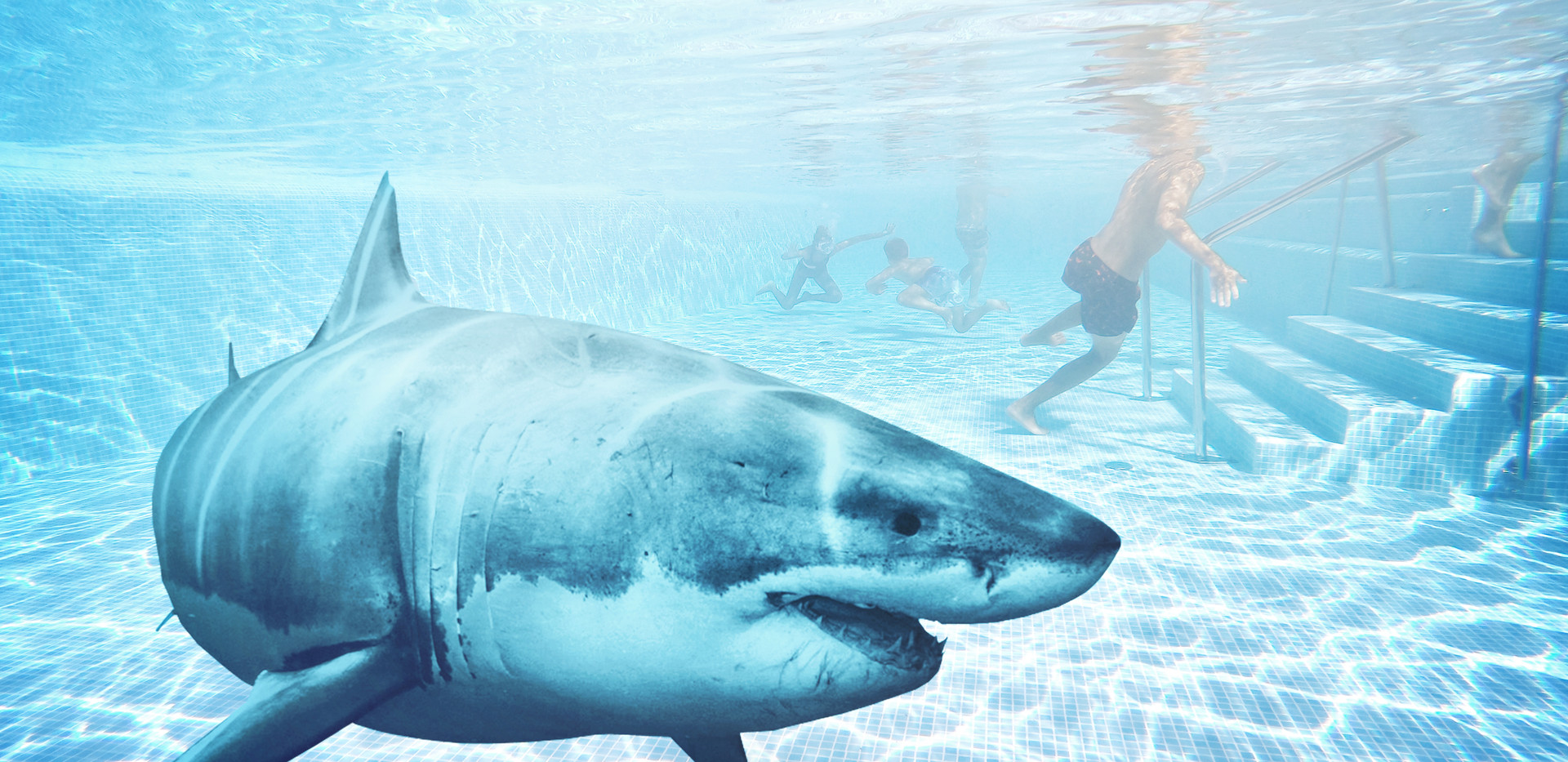 Shark Pool.jpg