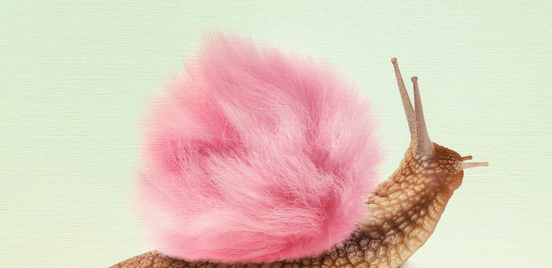 Fluffy snail.jpg