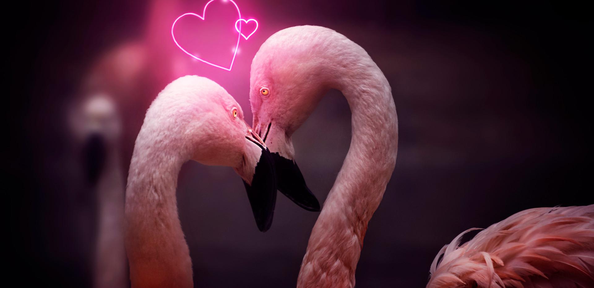 Flamingos in Love.jpg