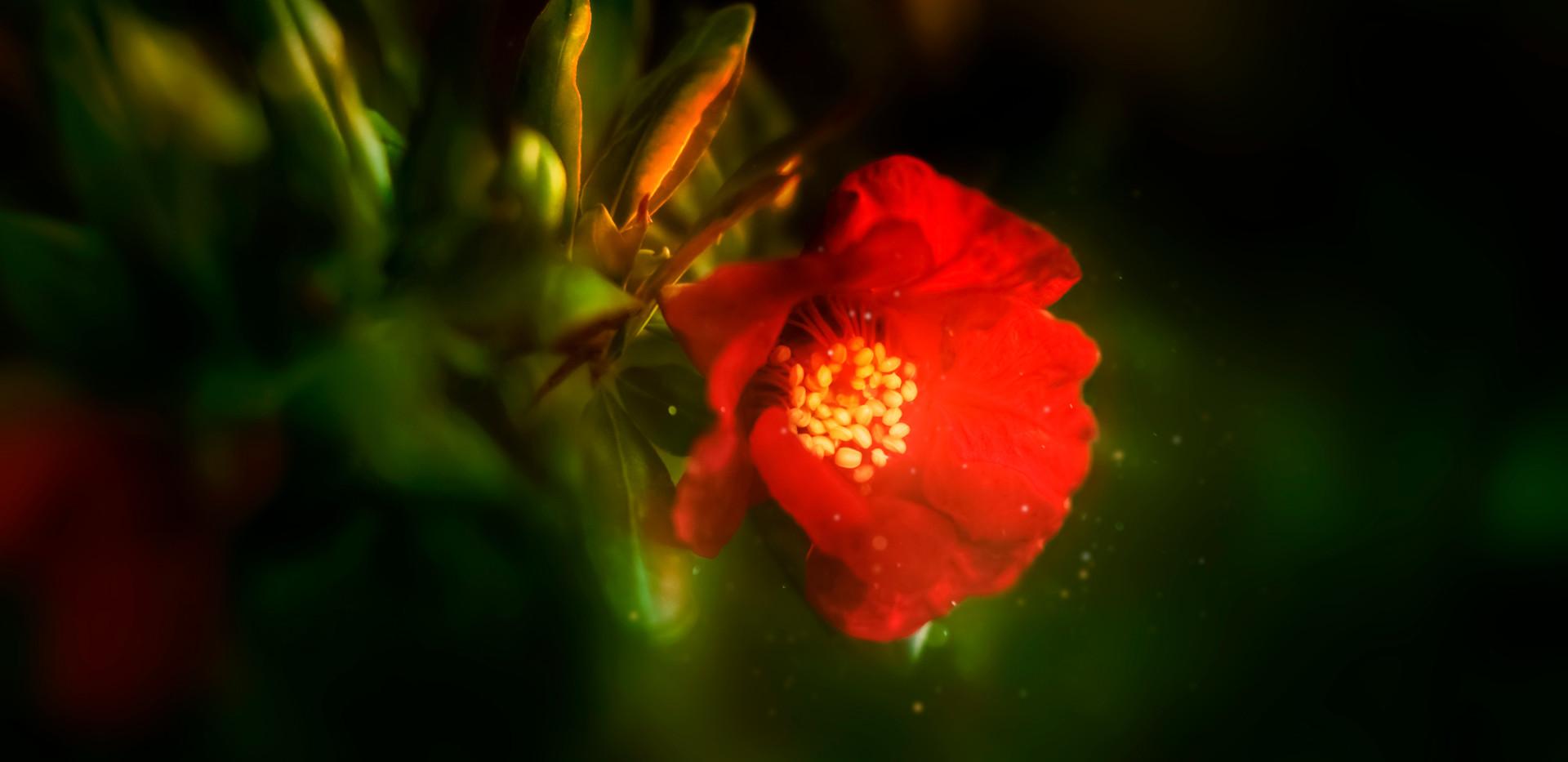 Glowing flower.jpg