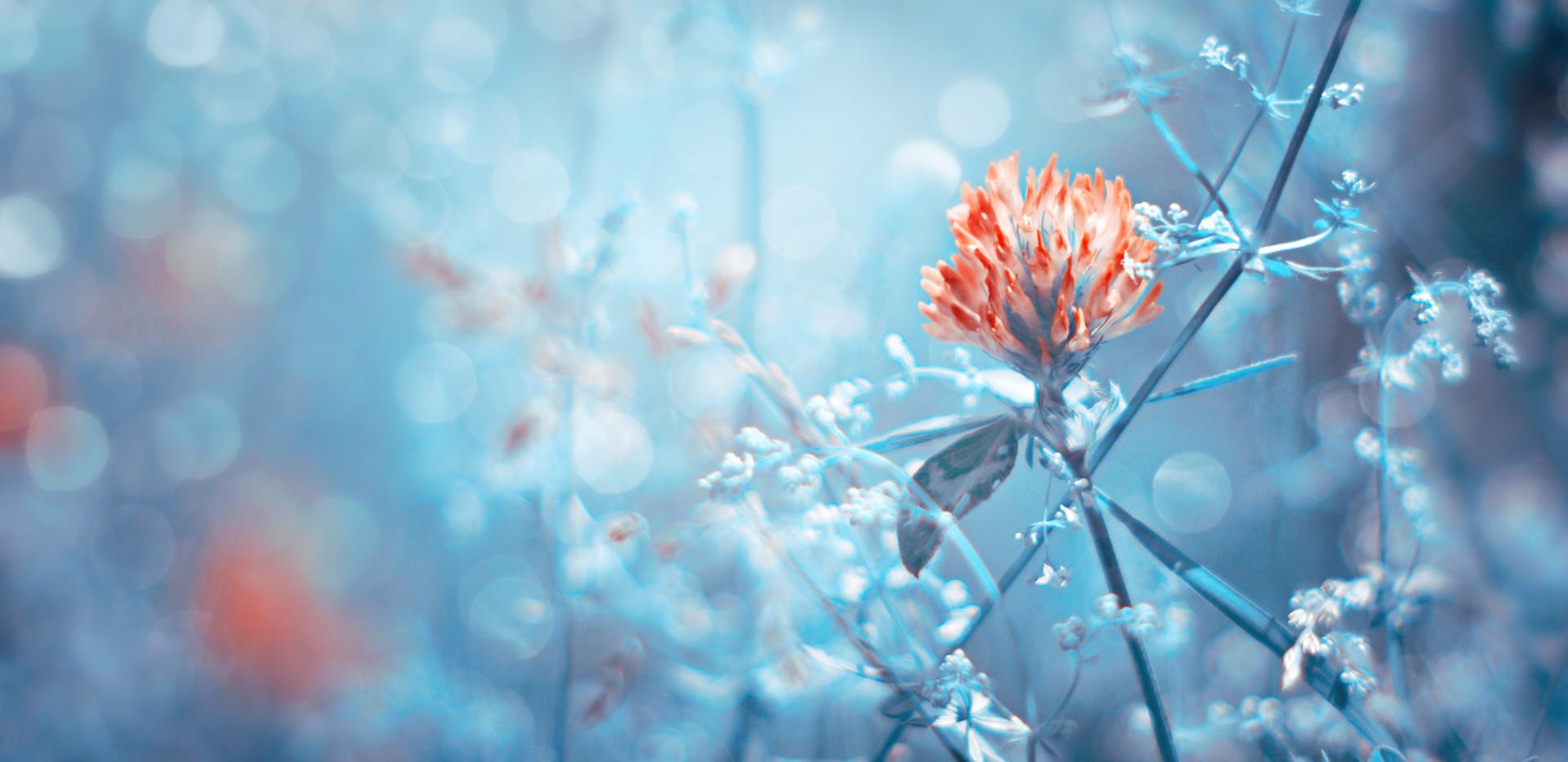 Blue bokeh flower.jpg