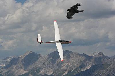 Segelfliegen Innsbruck TWIN III SL Adler