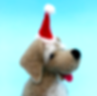 festive pooch close up.png