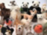 Animals 2.jpg