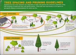 4. Spacing & Pruning Guidelines
