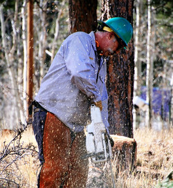 Mark Limbing a Tree