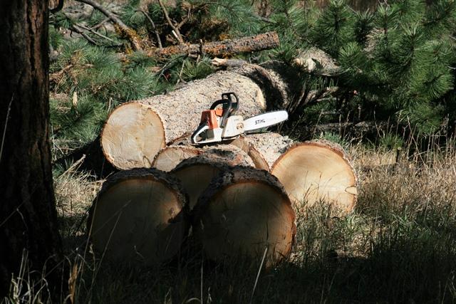 Saw & Bucked Log