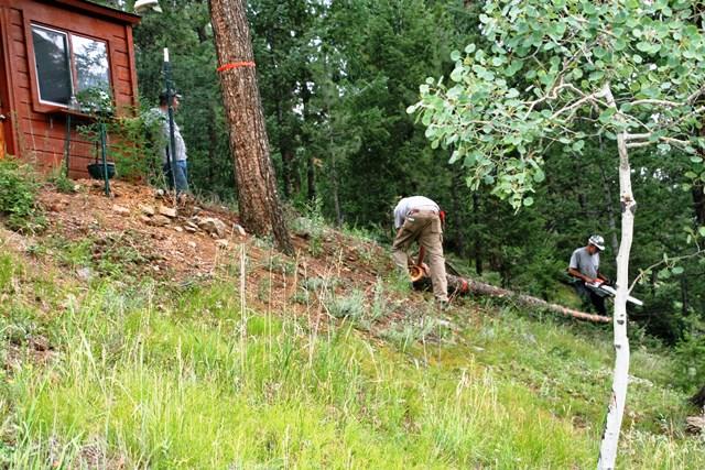 Bucking Logs