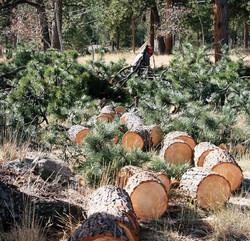 Bucked Logs