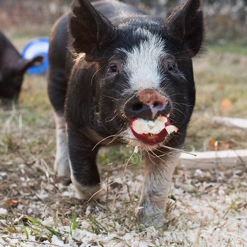 Pasture raised 100% Berkshire Pork Deposit