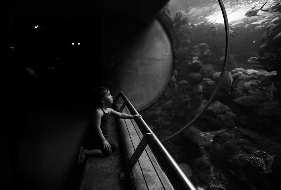 Maine Aquarium