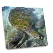 Canvas art: green sea turtle
