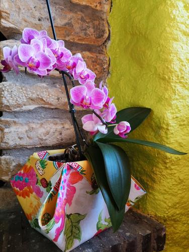 fleurscouleurs_ (11).jpg