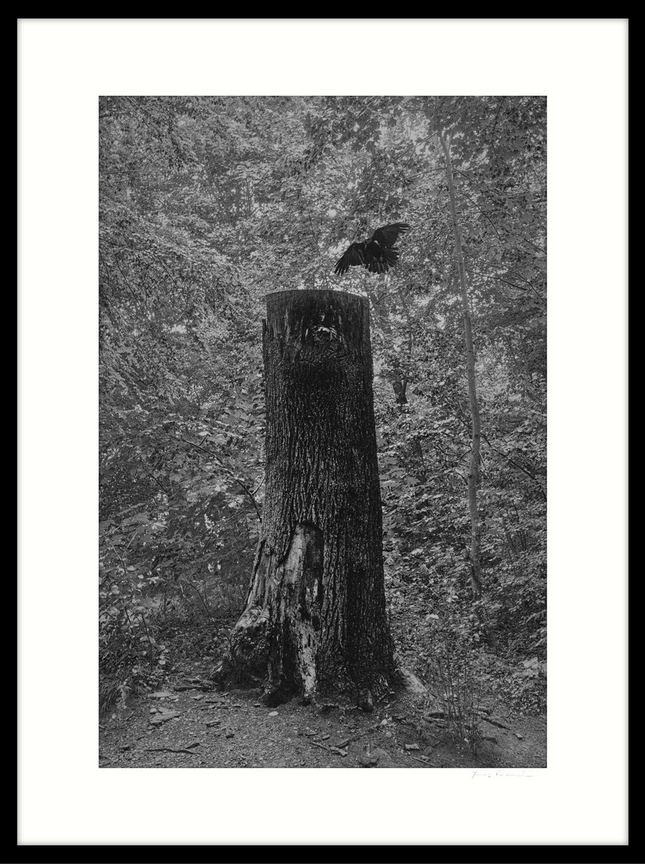 dødt træ II
