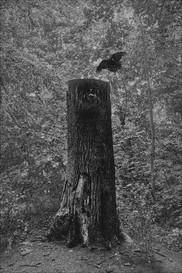 """""""dødt træ II"""""""