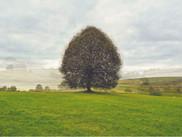 """""""around a tree"""""""