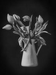 """""""tulipes fanées"""""""