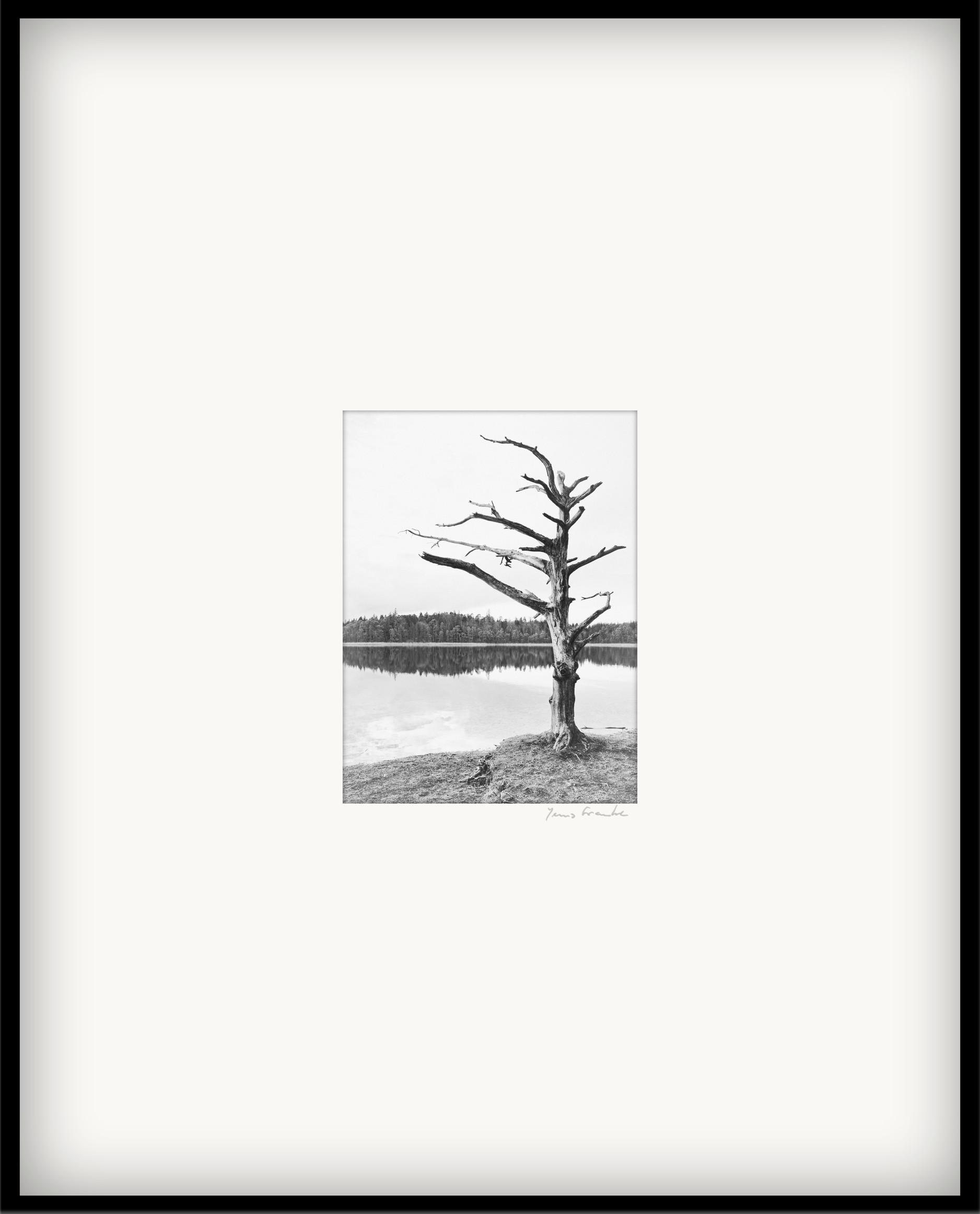 dødt træ