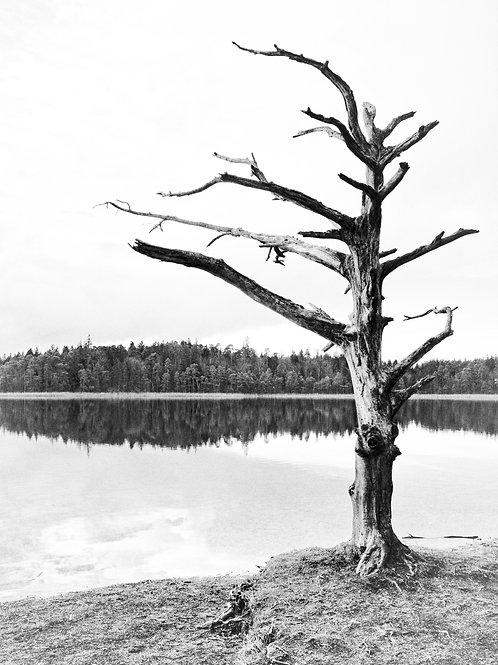 """""""dødt træ"""" (2017) © Yens Franke"""