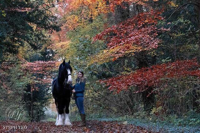 Shire horse on autumnal track
