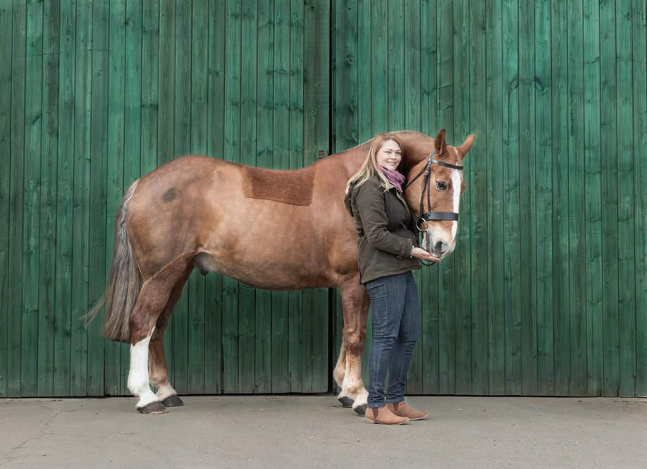 Chestnut horse against green wood