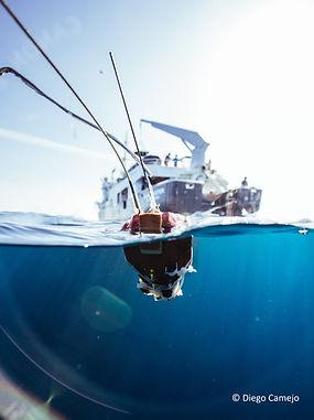 BTW Tiger Sharks-62.jpg