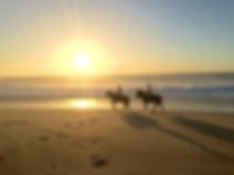 Hästar_på_Praia_do_N_2.jpg