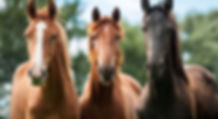 Equine-Therapy-for-Sex-Addiction-800x435
