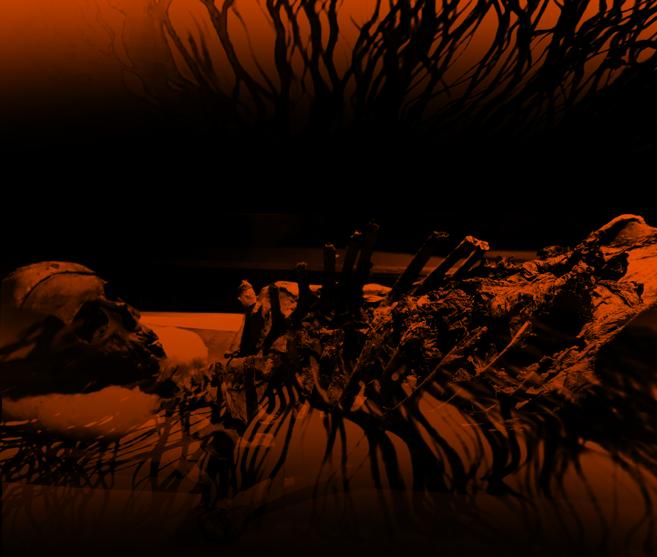 Root-Bones-Background.png