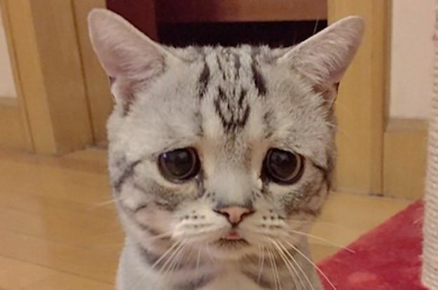 A sad looking cat