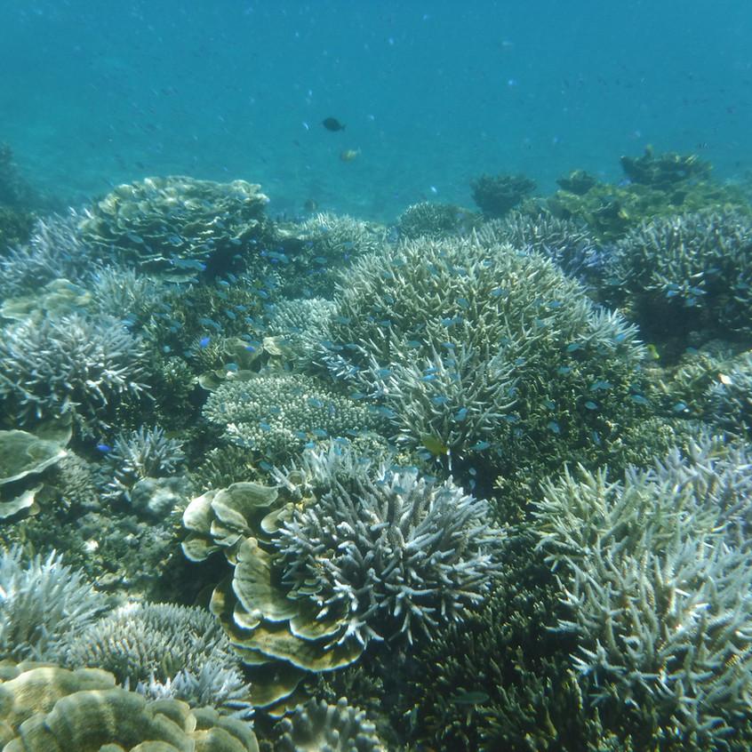 サンゴもバッチリ