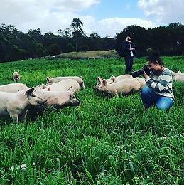 Melanda Park Pastured Pork