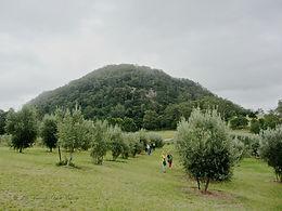 Kangaroo Valley Olives