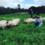 Melanda Free Range Pork Farm