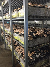 Margins Mushrooms