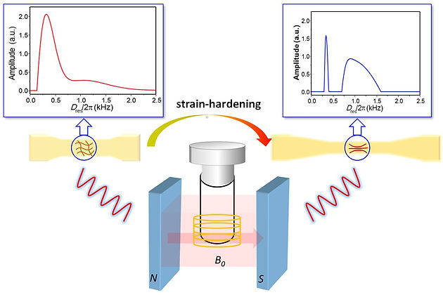 Strain-induced Structural and Dynamic Changes in Segmented