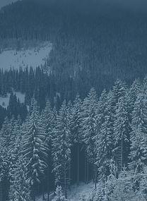 Sea of snowy trees_edited.jpg