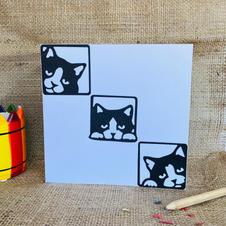 Black & white cats mutipack