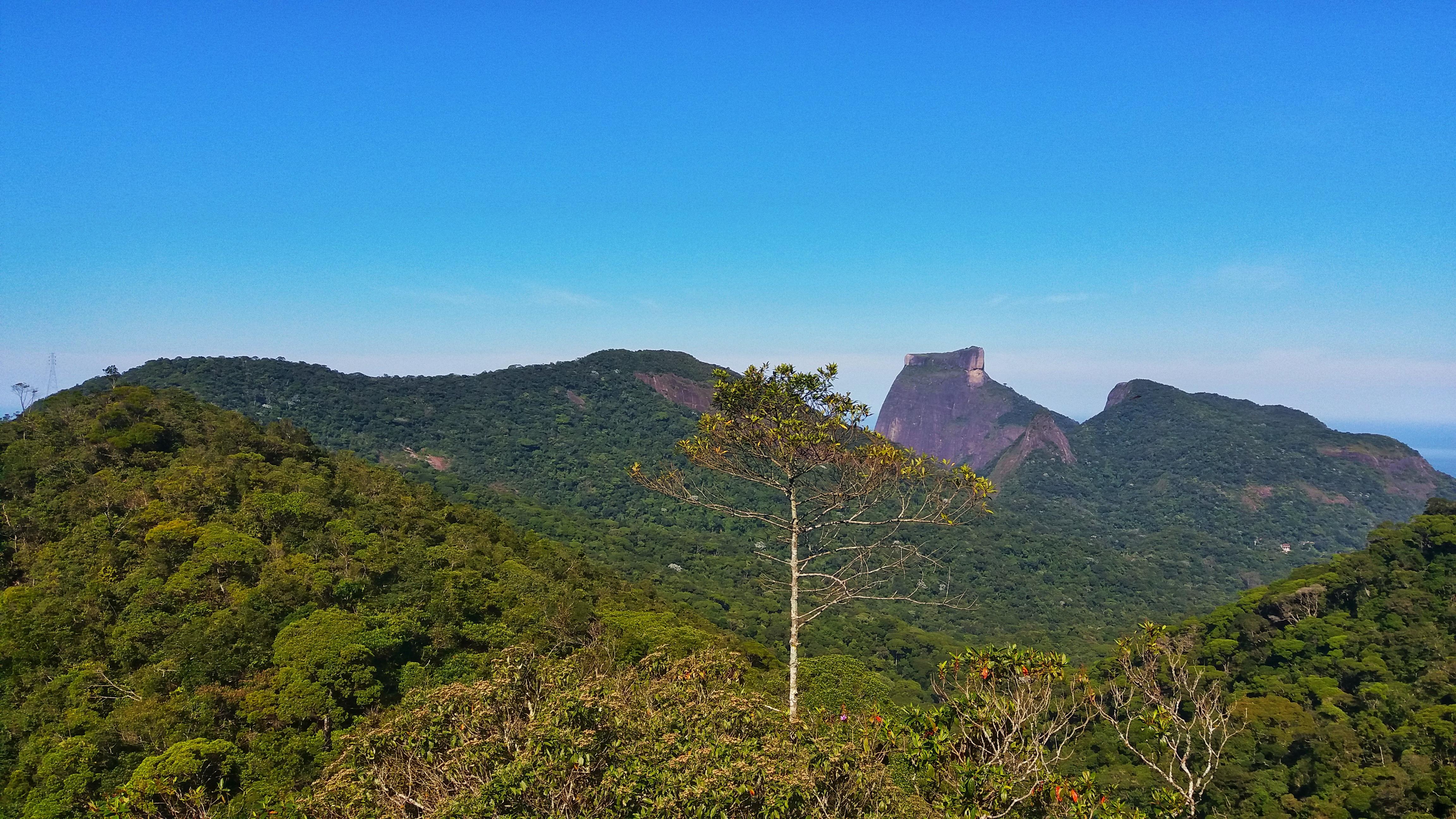 Run in Floresta da Tijuca