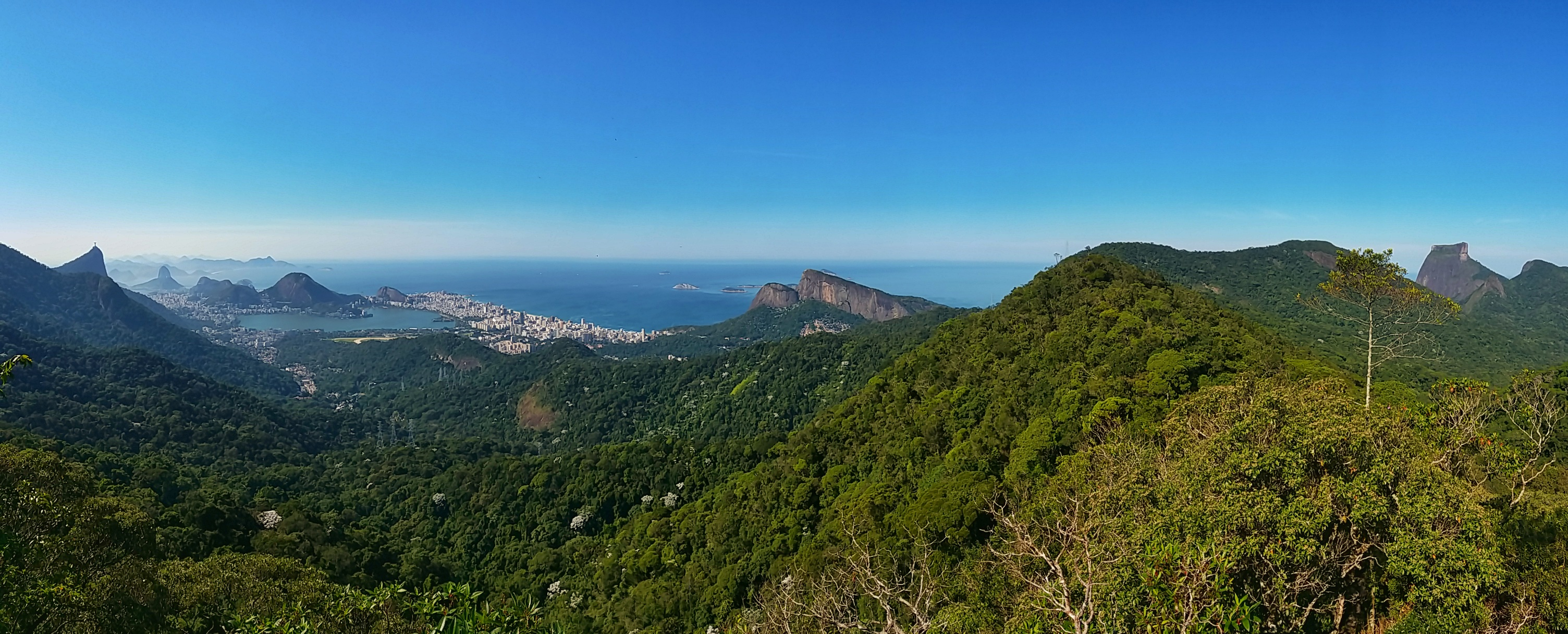 Rio Running Tour in Tijuca Forest