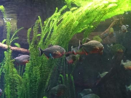 Cenova'da Çeşit Çeşit Su Hayvanı