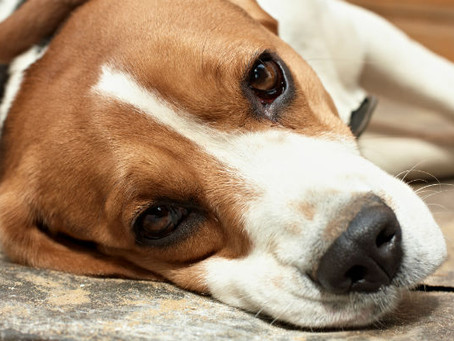 Have you ever heard of bloat in dogs? It's one of the most serious health emergencies that vets
