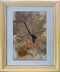 Dragonfly_opt.jpg
