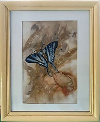 Blue Butterfly_opt.jpg