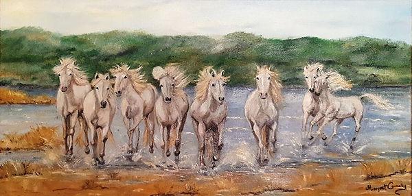 Carmargue Horses-opt.jpg