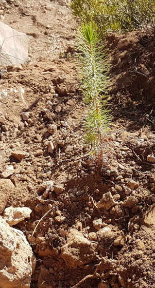 Recovering soil with trees
