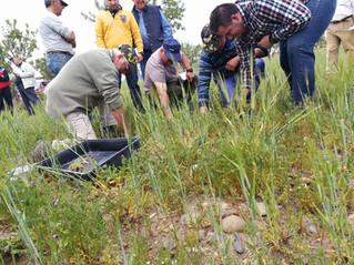 Monitoreando las prácticas regenerativas de suelo: Abonos Verdes